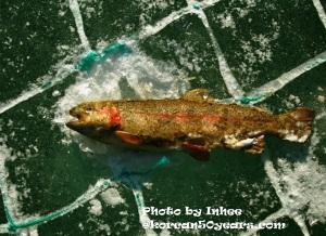 icefishing_5