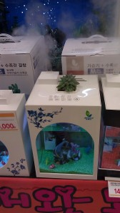 World's best (only?) aquarium / humidifier / planter at E-mart