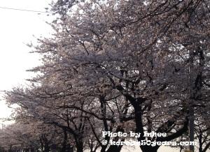 Spring Flower Festival_1