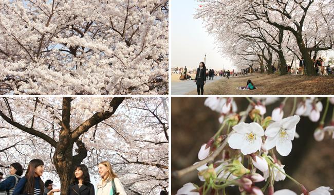 Spring Flower Festival_2