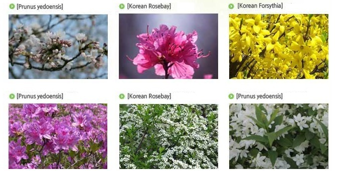 Spring Flower Festival_4