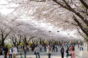 Spring Flower Festival_5