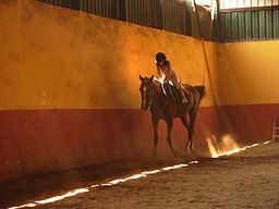 Horse-Riding-07694-nevit