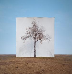 Tree Series by Myoung Ho Lee