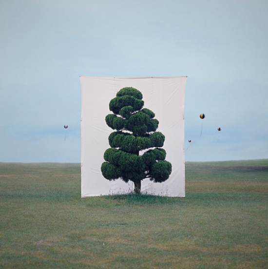 Tree Series by Myoung Ho Lee