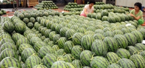 In Korea watermelons are a popular food product to bring to one's parent's house in the summer. Their just expensive and heavy enough to show that you really care!