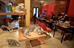Cat-Cafe-Hungary-0502131